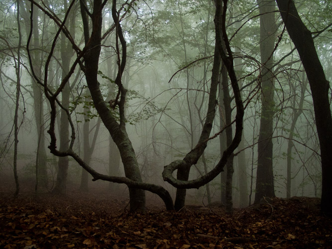 http://www.pedroarroyo.es/files/gimgs/44_montsignus02.jpg