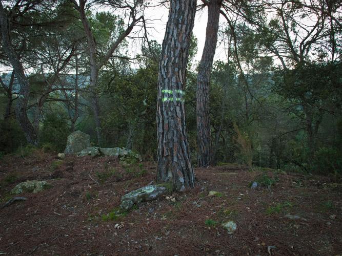 http://www.pedroarroyo.es/files/gimgs/49_49hitos21.jpg